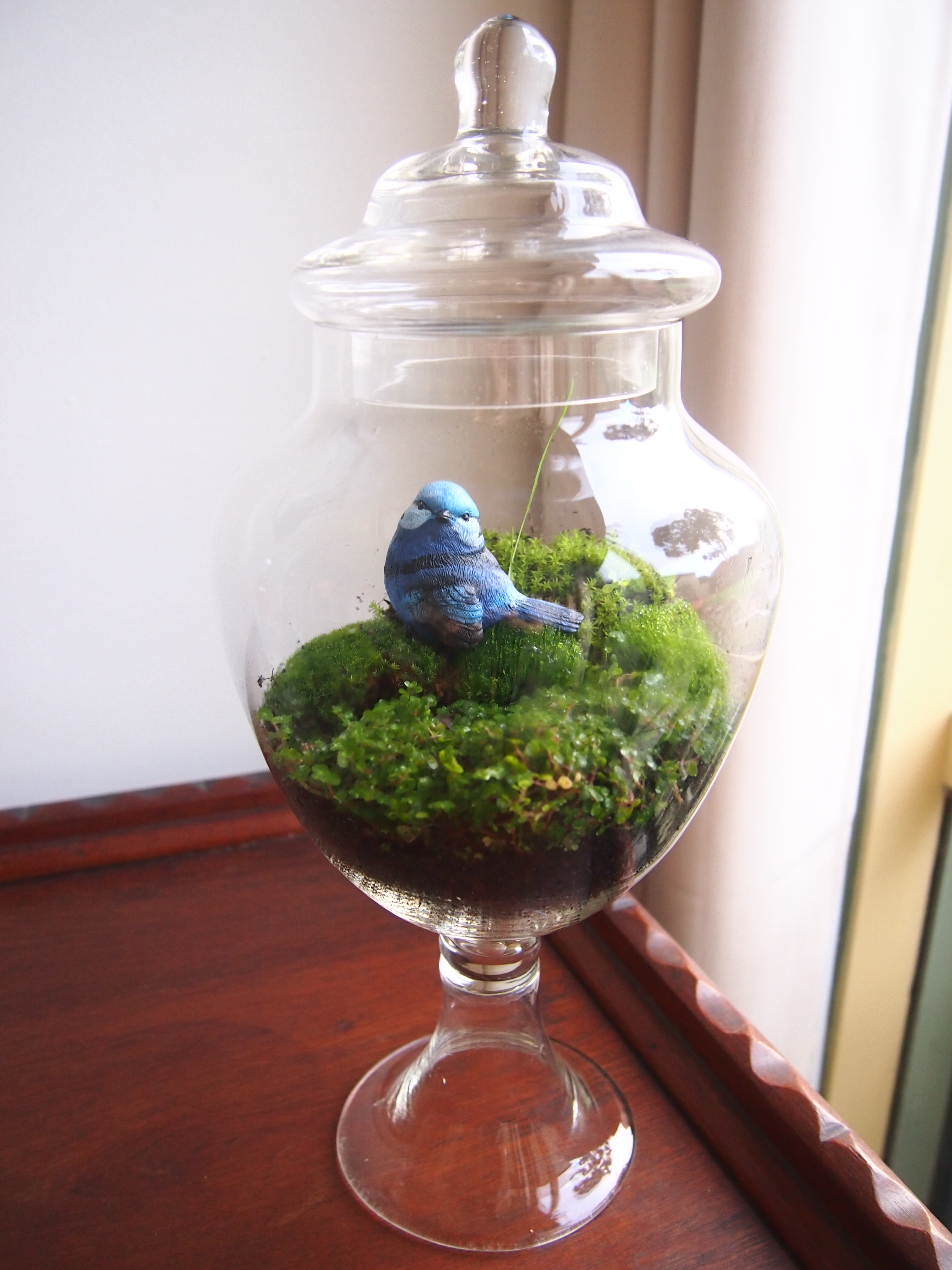 Moss Terrarium In A Lolly Jar What Maddy Did Next